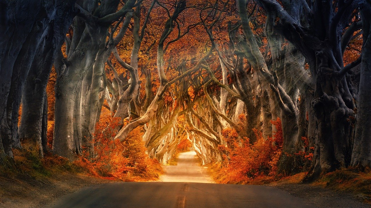the dark hedges, armoy, ireland