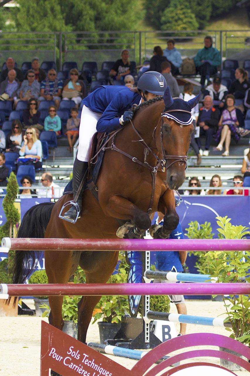 horse, jump, contest